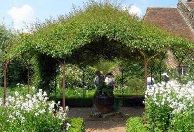 Живая зеленая крыша из вьющихся растений